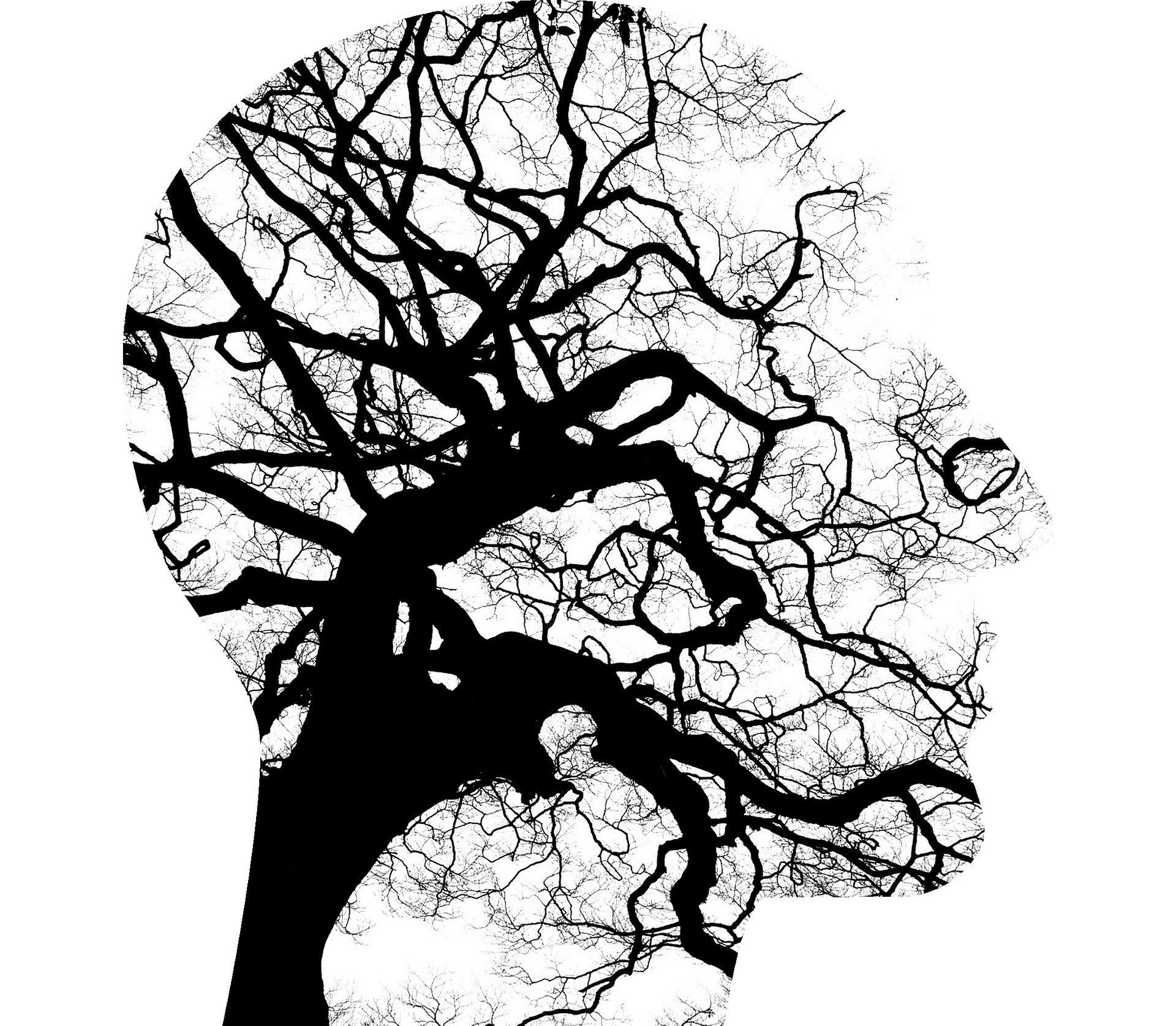 Curso Salud Mental y  Trastornos de Personalidad: Rasgos y herramientas
